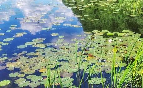 """Le iniziative organizzate dal Consorzio Bacchiglione per la """"Settimana Nazionale della Bonifica e dell'Irrigazione"""""""