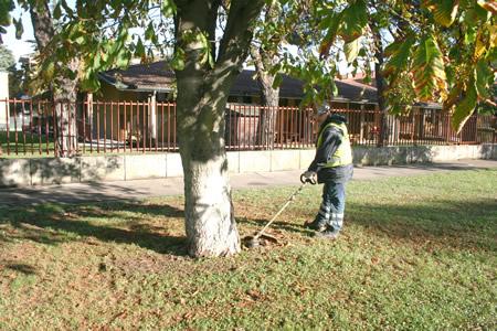 Amia Verona prosegue gli interventi di manutenzione del verde pubblico