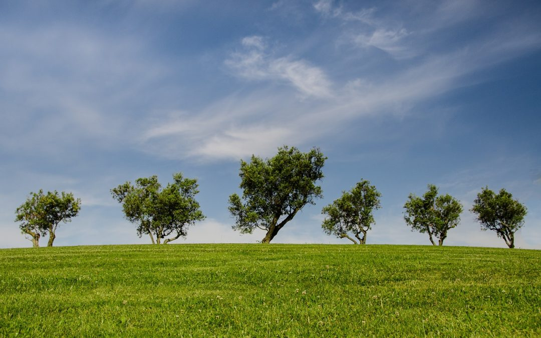 """1.500 alberi saranno piantati in due aree abbandonate grazie al progetto """"Fabbrica dell'Aria"""" di Ascotrade"""