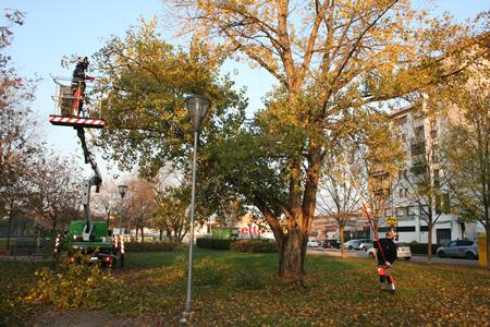 Continuano gli interventi di manutenzione e potatura degli alberi della città di Verona