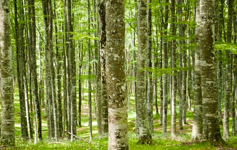 Un convegno sulle prospettive gestionali per i boschi nell'era dei cambiamenti climatici