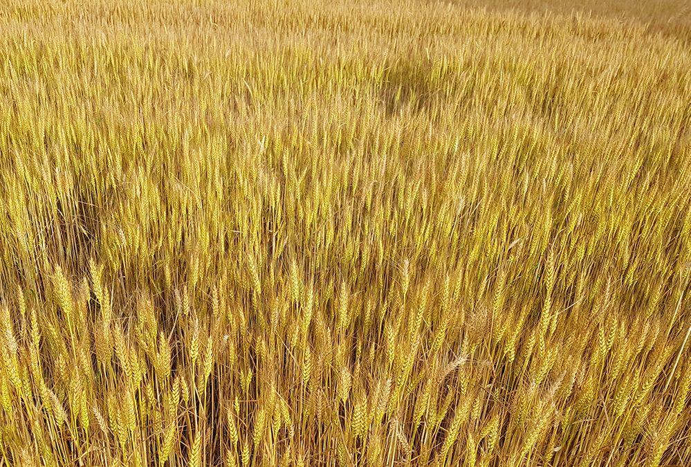 Alla ricerca del carbonio perduto: un convegno di Veneto Agricoltura