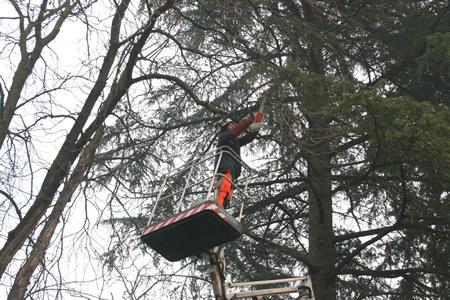 Gli interventi settimanali di Amia Verona per la potatura degli alberi