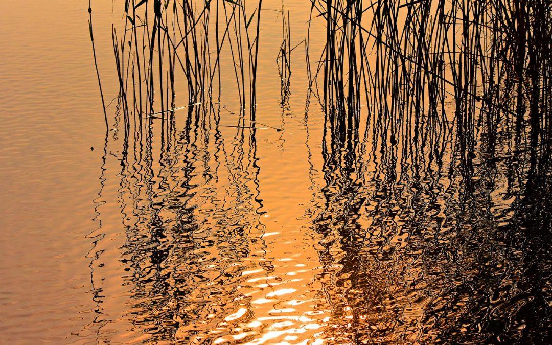 Giornata mondiale zone umide: il Consorzio Acque Risorgive propone visite guidate in tre oasi
