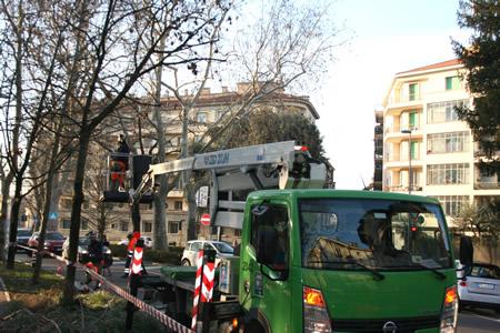 Proseguono senza soste gli interventi di potatura degli alberi di Amia Verona
