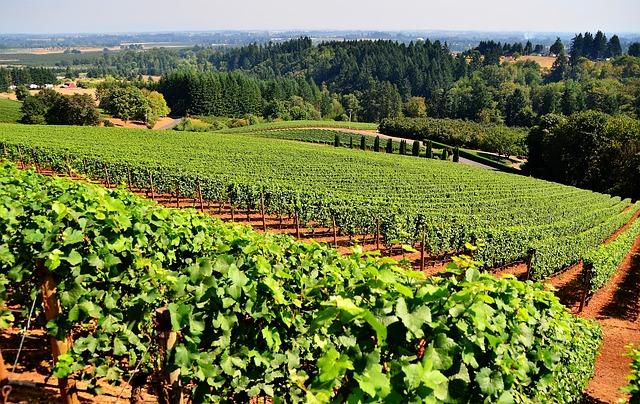 L'evoluzione dell'agricoltura e il Green Deal saranno di scena il 28 febbraio a Legnaro