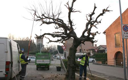 Rese note le aree di Verona interessate in questi giorni dalla potatura degli alberi