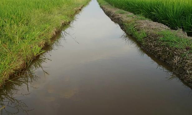 In corso lavori per la sicurezza idraulica e l'irrigazione sullo scolo Acque Straniere ad Arzergrande