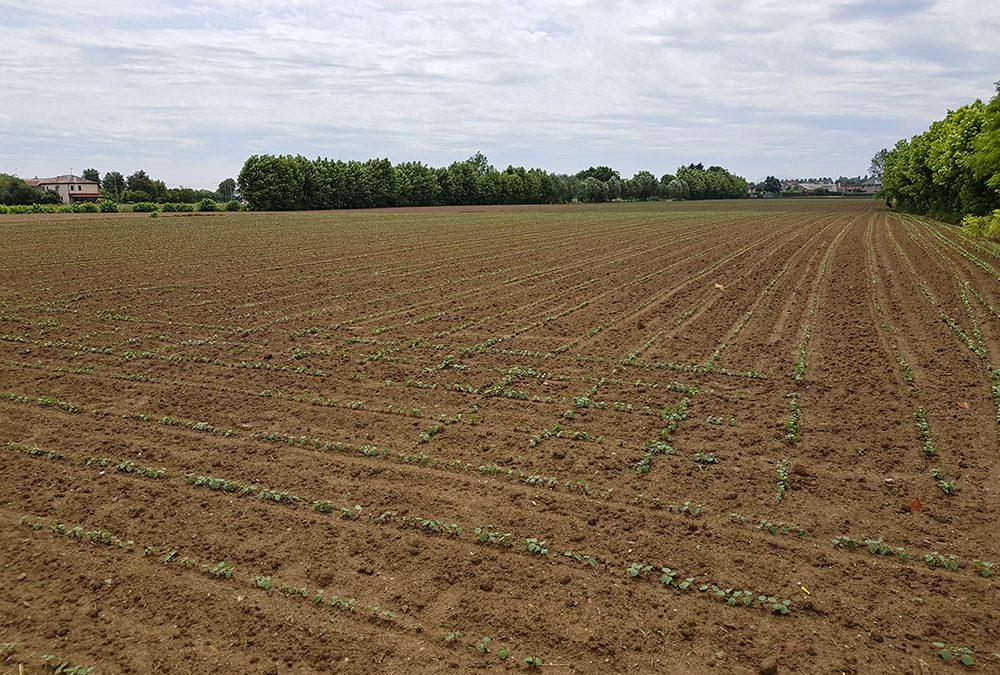 Diffusi i nuovi numeri della newsletter Agricoltura Veneta e del quindicinale Veneto Agricoltura Europa