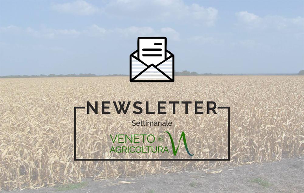 Il Festival di Bressanvido iniziato ieri e molte altre notizie sull'ultimo numero della newsletter Agricoltura Veneta