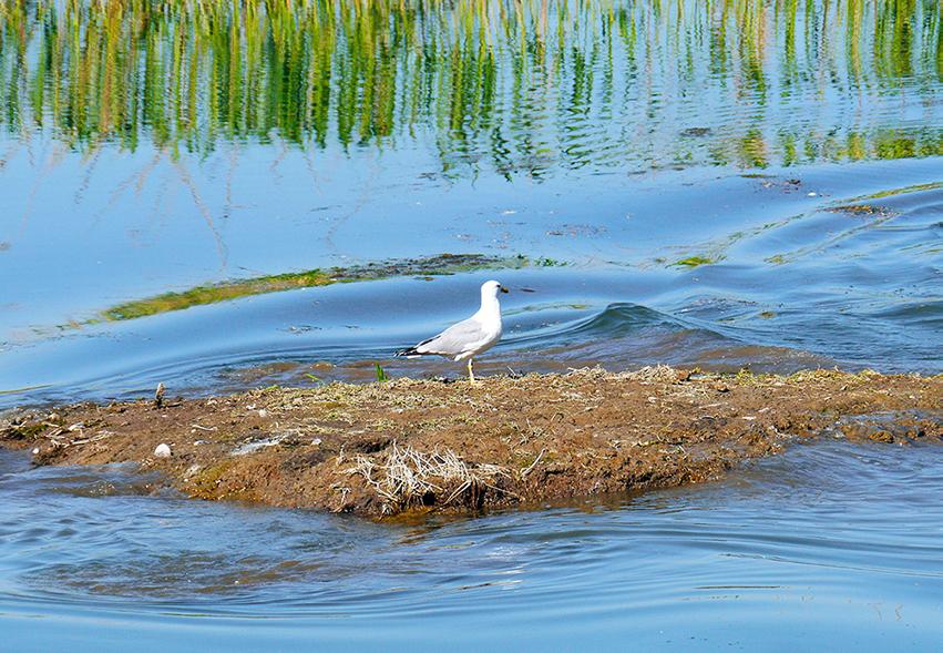 Annunciato il primo di quattro cantieri sul Marzenego–Osellino per ridurre i nutrienti sversati nella Laguna di Venezia