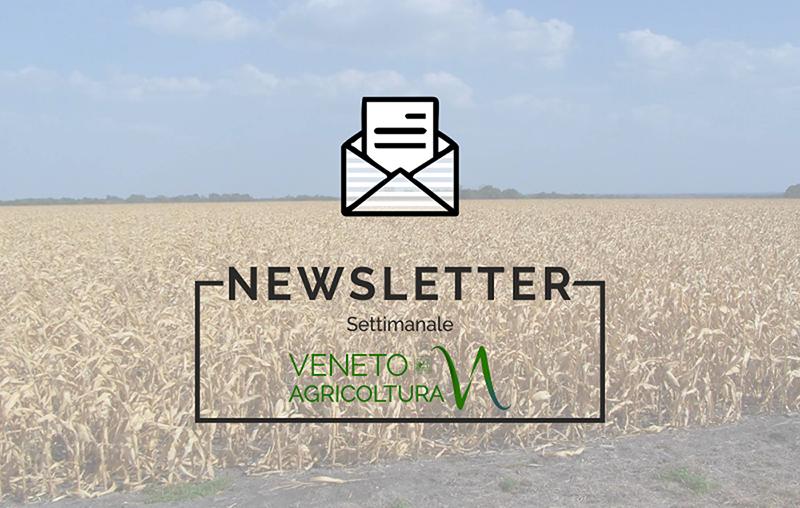 Un nuovo numero della newsletter Agricoltura Veneta è stato pubblicato e diffuso. E' disponibile anche on line