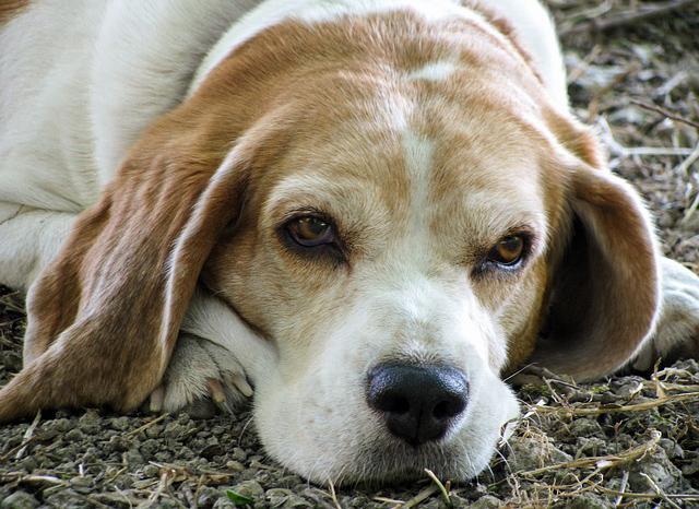 Amia e il Gruppo Cinofilo Verona proseguono la collaborazione contro l'abbandono  delle deiezioni canine