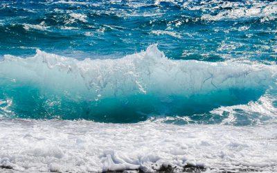 Un progetto per la conservazione degli habitat e delle specie presenti nei siti Natura 2000 del Mare Adriatico