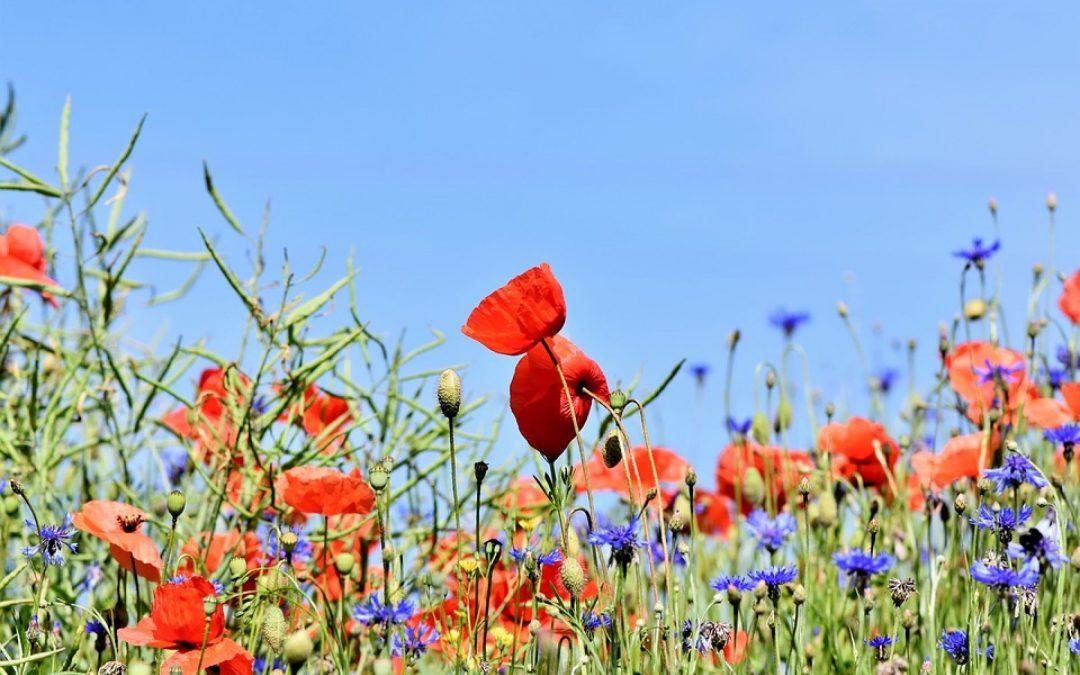 Il progetto europeo LIFE Biodiversità PollinAction per salvaguardare gli insetti impollinatori e la biodiversità