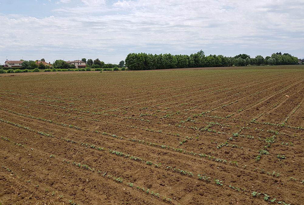 Sperimentazione del Consorzio Veneto Orientale per aumentare la capacità del terreno di trattenere l'acqua