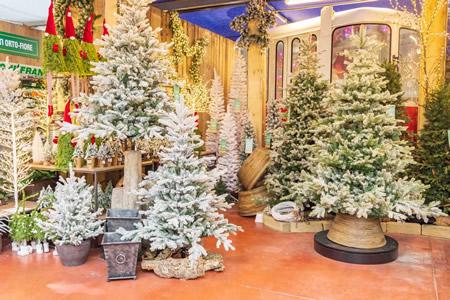 Amia Verona ripropone anche quest'anno l'albero di natale naturale, non sintetico, rispettoso dell'ambiente