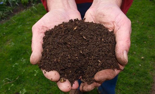 Newsletter di Veneto Agricoltura: in serata webinar sulla sostanza organica sempre più carente ma indispensabile
