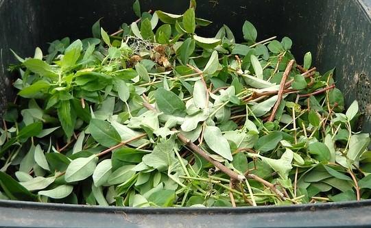 Da luglio AMIA Verona ha raccolto a domicilio circa 800 tonnellate tra sfalci, potature e foglie dei giardini privati