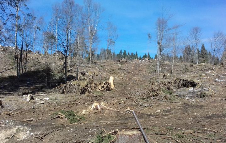 Rimboschimenti di Veneto Agricoltura a Pian Rosada, area che fu particolarmente colpita dalla Tempesta Vaia