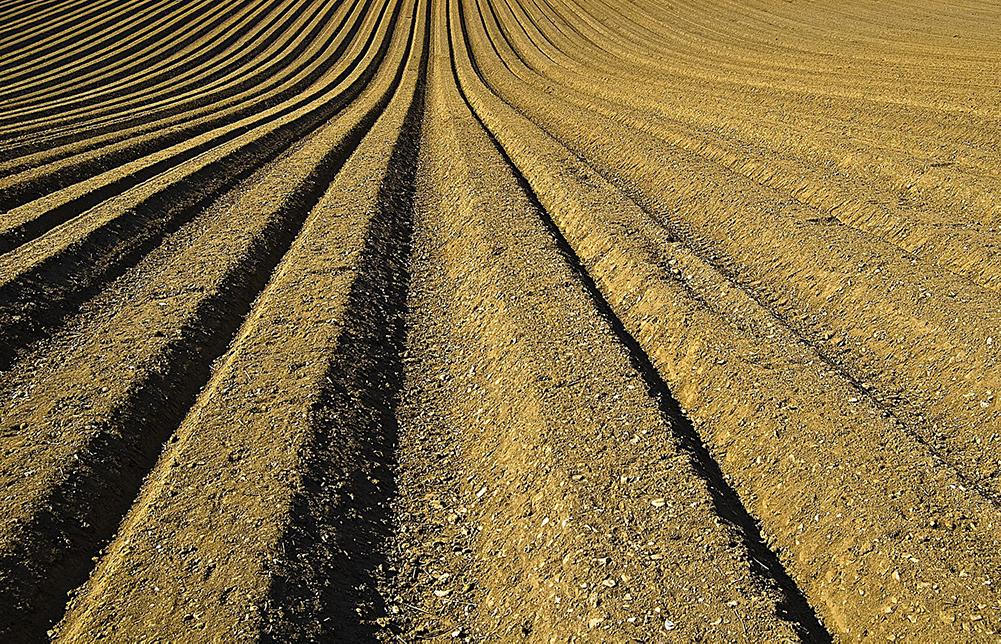Disponibili on line le 70 proposte del Veneto per il Piano Strategico Nazionale per la Politica Agricola Comune