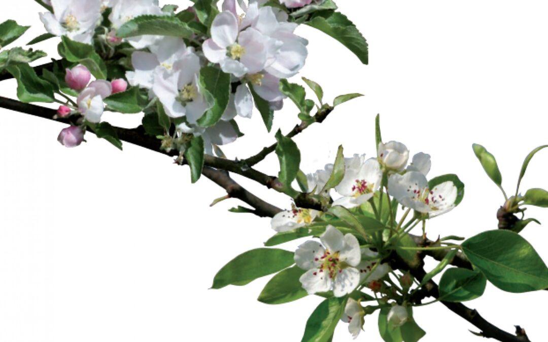 A Ceregnano, con il programma BIONET, l'azienda Sasse Rami sempre più scrigno della biodiversità fruttiera