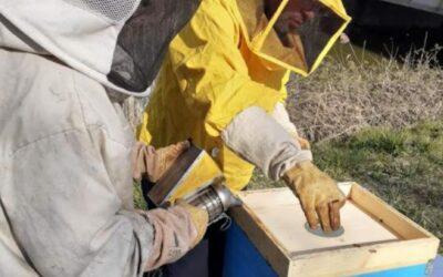La salvaguardia delle api con le arnie elettroniche innovative di Veneto Agricoltura a Vallevecchia di Caorle