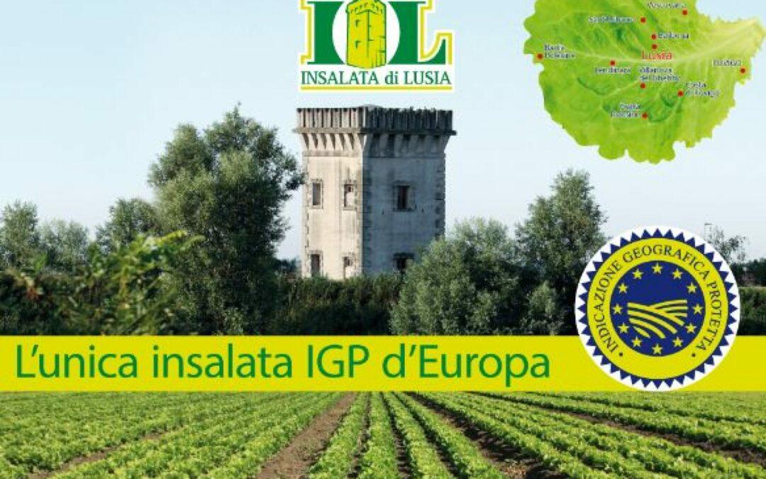 Il focus di Veneto Agricoltura fa tappa in Polesine con l'insalata di Lusia, unica lattuga europea con il marchio IGP
