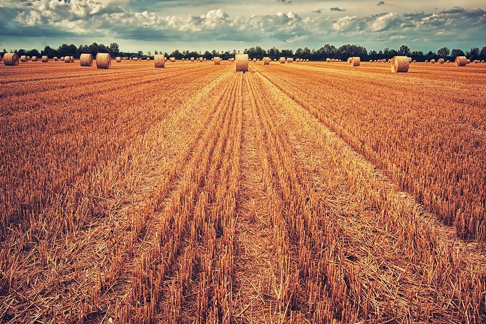 Sale a 1.561 milioni di euro la dotazione finanziaria complessiva del Programma di Sviluppo Rurale del Veneto