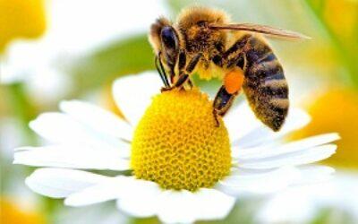 Veneto Agricoltura Channel dedica la nuova puntata sulle DOP  alle sei tipologie del Miele delle Dolomiti Bellunesi