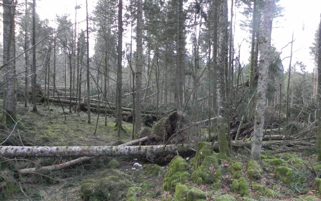 """Per la riforestazione dei boschi, al via il progetto europeo """"LIFE VAIA"""" con una ricaduta sul Veneto di 3,5 milioni di euro"""
